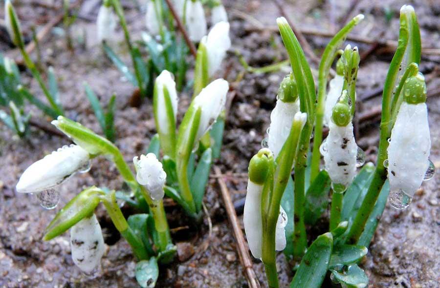 Obiectivul aparatului foto a descoperit primele semne sigure ale primăverii