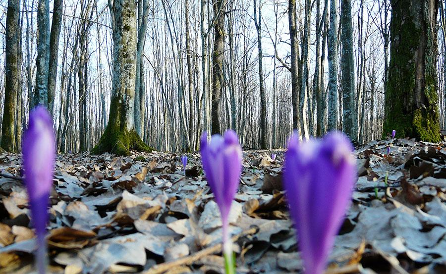 Întreaga natură renaşte cu fiecare oră pentru că vine primăvara