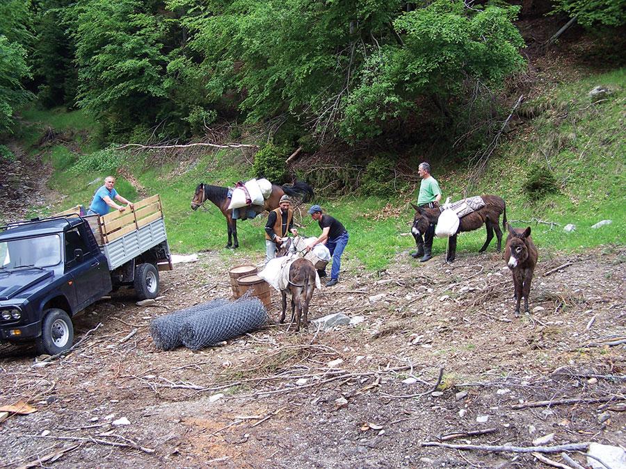 Proprietarii de animale de la Crasna, nevoiți să plătească arendașilor dacă vor să aibă unde paște oile, deși sunt proprietarii munților