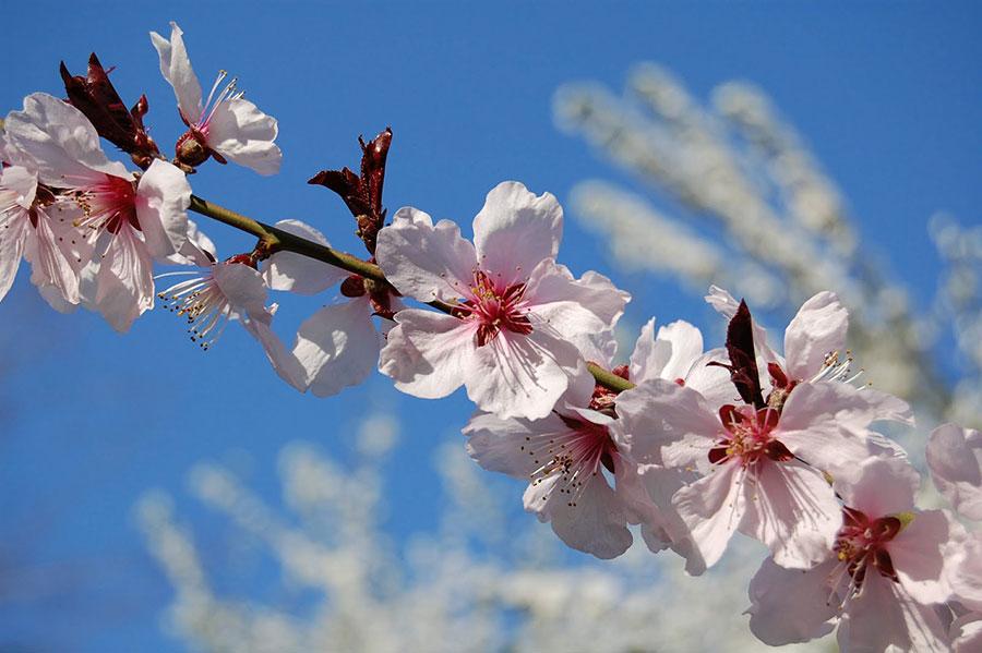 Natura nu a aşteptat numărul gradelor din termometru ca să arate că a venit primăvara