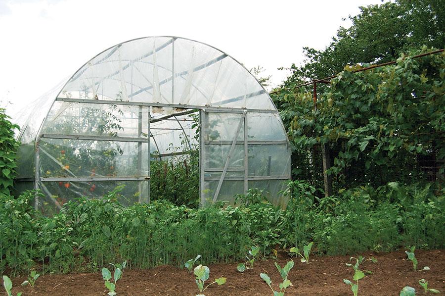 Sprijin guvernamental pentru fermierii din domeniul agriculturii ecologice