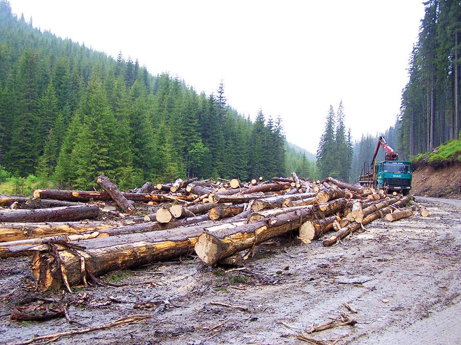 Pădurile Asociației Obștea ARC, o avere ce ar putea să asigure venituri frumoase membrilor