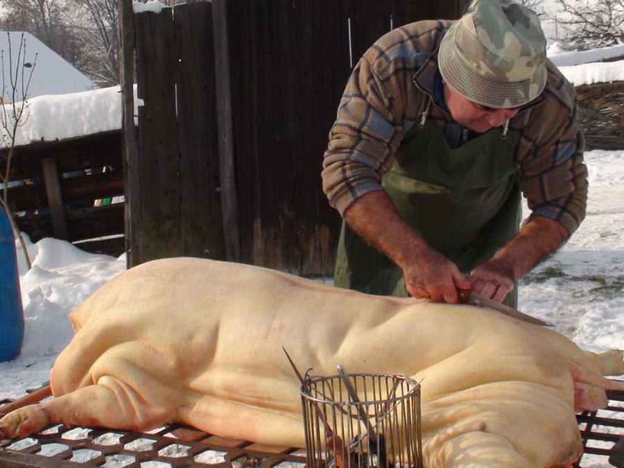 Chiar și în Uniunea Europeană, românii nu au abandonat sacrificarea porcului în preajma Crăciunului
