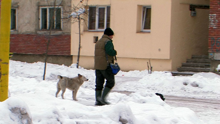 Fenomentul câinilor vagabonzi din Rovinari va fi stopat, conform legii