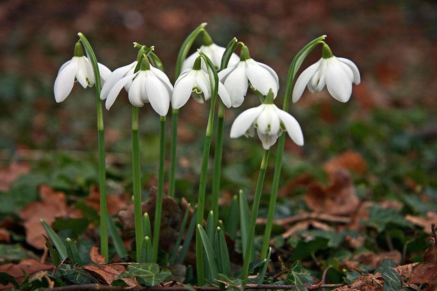 Primăvara a sosit cel puțin prin vestitorii săi