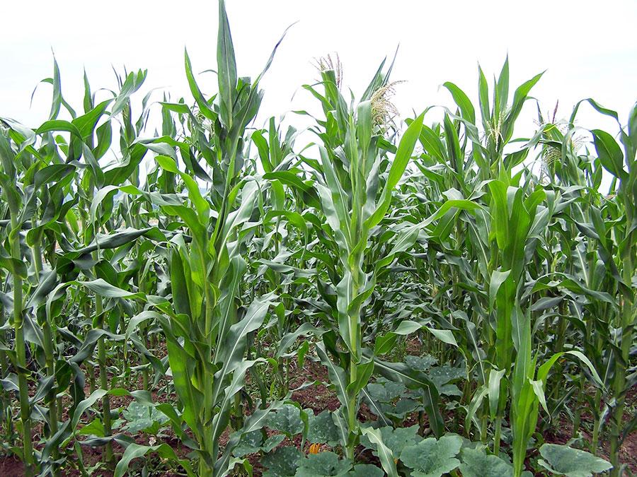 Prezenţa anuală a rentierilor la sediul APIA, pentru vizarea carnetelor de rentier agricol este o condiţie esenţială pentru a beneficia de renta cuvenită