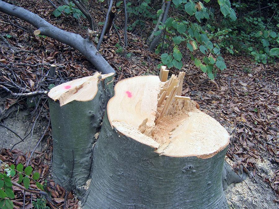 Tăierea necontrolată a pădurilor poate aduce dezastre naturale cum a fost viitura de la Novaci
