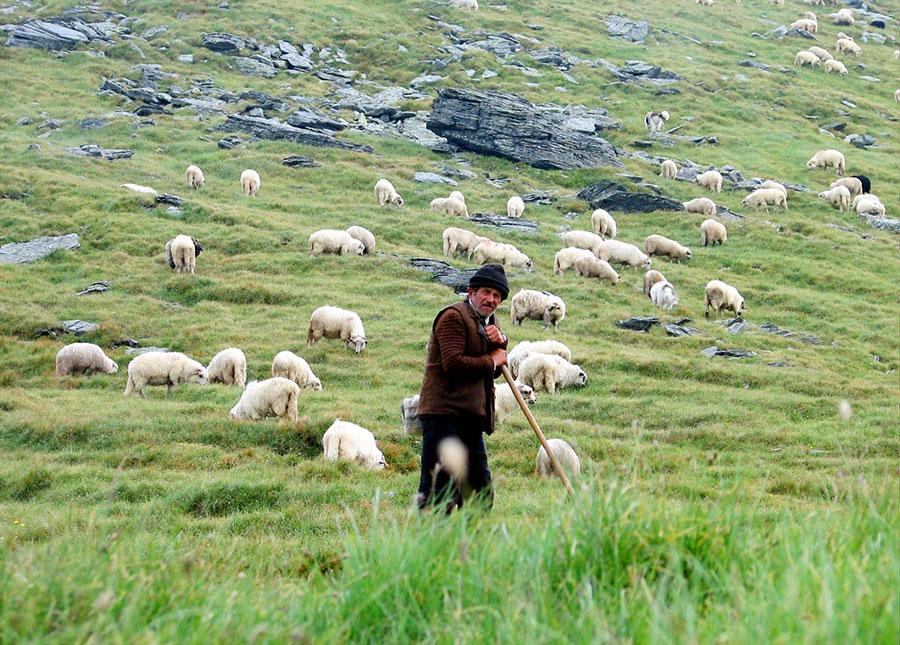 Păstoritul a fost totdeauna o ocupaţie propice regiunii, o muncă uşoară, rentabilă şi în acelaşi timp şi plăcută.