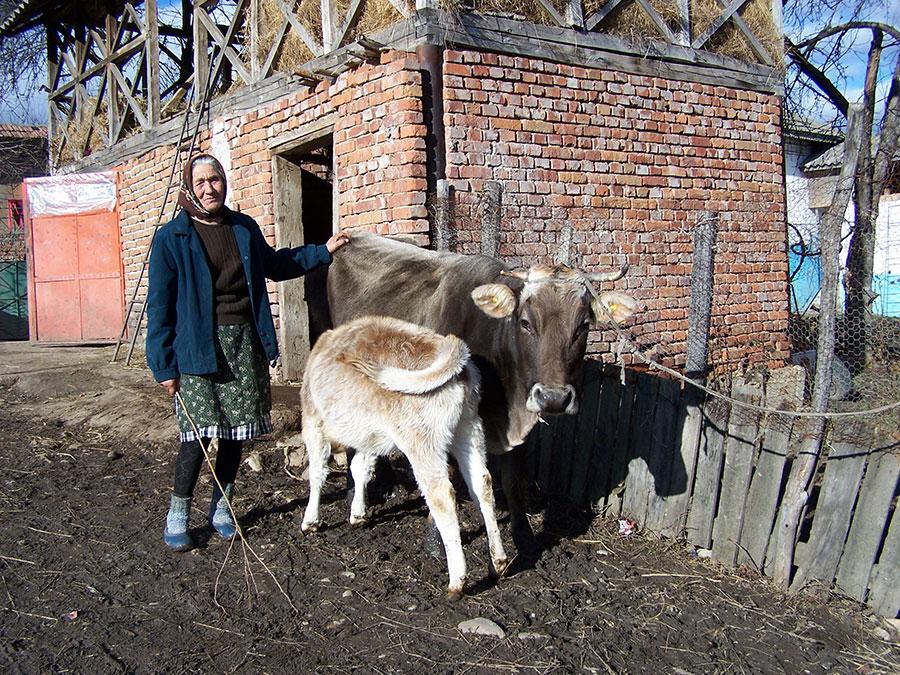 Proprietarii de animale pot accesa credite până vin subvențiile