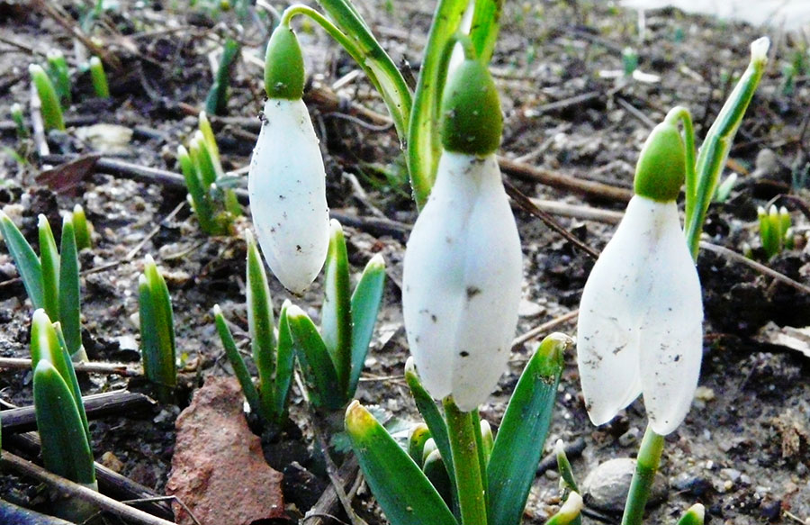 Primele semne ale primăverii au apărut în…ianuarie