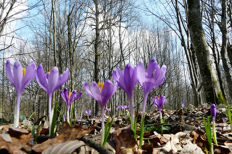 Sunt tot mai multe semne, nu doar calendaristice, că vine primăvara