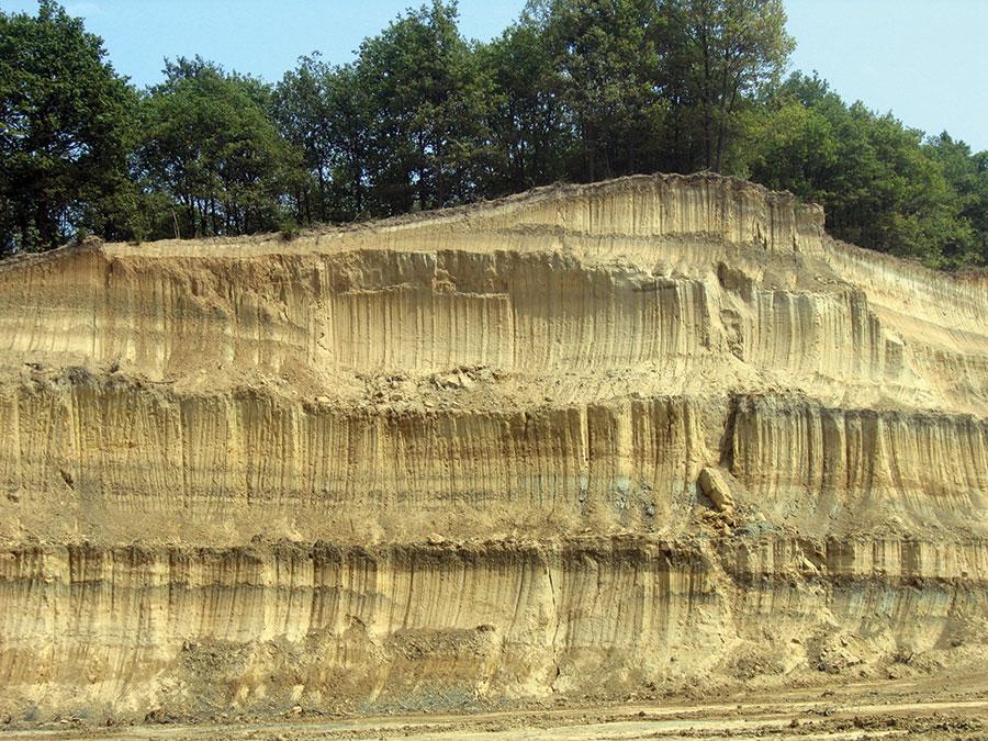 Sute de hectare de pădure sunt defrișate pentru a lăsa loc exploatrii cărbunelui