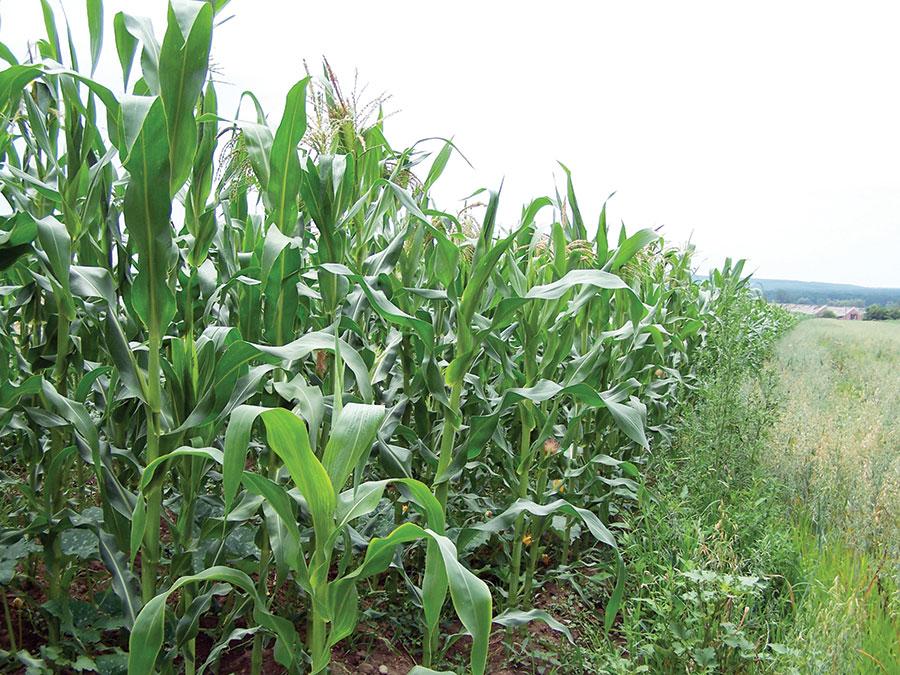 Micii fermieri din Gorj, care îşi arendează terenul agricol pentru 20 de ani sau îl vând, vor primi o subvenţie de 1.500 euro/an