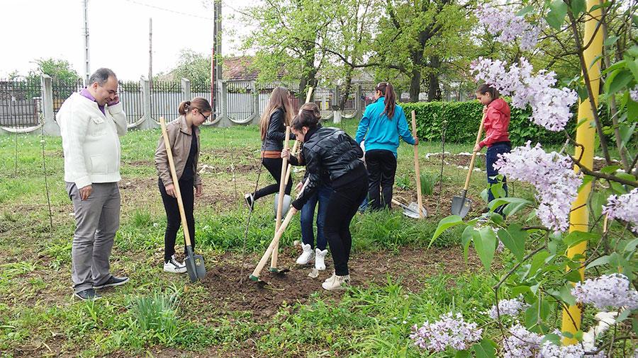 Elevii de la Ceauru s-au implicat în plantarea merilor