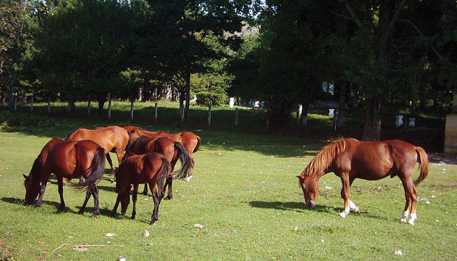 Înscrierea în registrul agricol este obligatorie pentru toți deținătorii de terenuri agricole și/sau animale