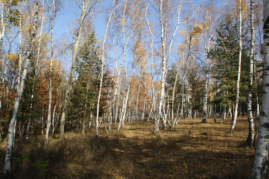 Pădurea păstrează taina neuitatelor iubiri
